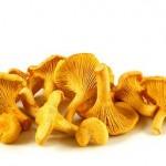 Cogumelos Finferli